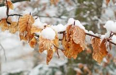 Herbstlaub und Winterschnee im (April-)Frühling. (Bild: Walter Schmidt)