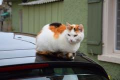 Den Überblick bewahren. Dazu ist ein Autodach doch geeignet. (Bild: Hansjürg Oesch)