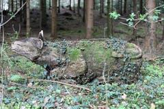 Ottenberg: Die Kuh macht nicht muh. (Bild: Georg Locher)