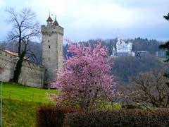 Blick vom Bramberg (Bild: Walter Buholzer, Luzern, 3. April 2019)