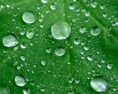 Die Schönheit des Regens. (Bild: Jürg Nadler)