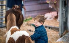 Grosse Freude für die Kleinen Besucher macht der Streichelzoo. (Bild: Reto Martin)