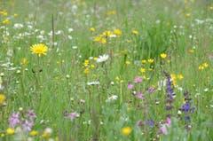 Rund 40 Kräuter- und 15 Gräserarten sind in der Blumenwiese zu finden.