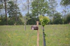Solange die 250 neu gepflanzten Obstbäume noch klein sind, werden Nistkästen an Pfosten aufgehängt.