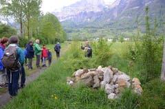 Rund 60 Personen nahmen an der Exkursion vom Verein Pro Riet Rheintal nach Frümsen teil.