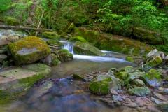Im Kellentobel, hinter der Tobelmüli bei Thal beginnt der grüne Dschungel. (Bild: Franz Häusler)