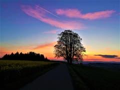 Traumhaftes Abendrot. (Bild: Urs Gutfleisch, Ruswil, 14. Mai 2019)