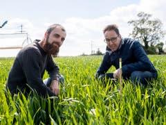 Agroscope-Forscher Marcel van der Heijden (links) und Raphael Wittwer kontrollieren die Felder für die Messung der Lachgas-Emissionen. (Bild: KEYSTONE/ENNIO LEANZA)