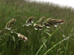 Der Regen hat auch seine schönen Seiten. (Leserbild: Toni Sieber)