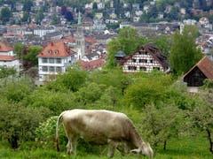 Saftige Weiden an bester Lage - mit Blick auf die Stadt. (Bild: Doris Sieber)