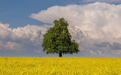 Gelb, grün und blau, besser als grau wie heute! Aufgenommen bei Arnegg. (Bild: Luciano Pau)