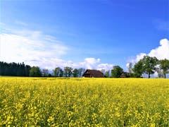 Frühlingswetter: Der Frühling ist endlich da! (Bild: Urs Gutfleisch, Emmen, 22. Mai 2019)