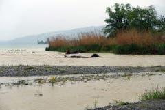 Der Bodensee füllt sich. Hier die Steinachmündung. (Bild: Walter Schmidt)