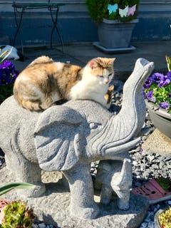 Auf Safari - Die Katze auf dem Elefanten.(Bild: Renate Wachsmuth)