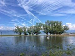 Land unter am Bodensee. (Bild: Toni Sieber)