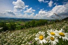 Eine prächtige Naturwiese. (Bild: Vinzenz Blum, Egolzwil, 27. Mai 2019)