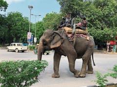 Elefanten gehören in Delhi zum Strassenbild. Verkehrsregeln gibt es kaum, aber irgendwie kommt man meistens zum Ziel.