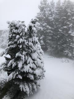 «Schneeschaufeln statt Rasenmähen» schreibt Leserin Nicola Zoller zu ihrem Bild aus dem St.Galler Oberhofstetten-Quartier.