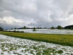 Die Vielfalt der Jahreszeiten bei Wilen-Gottshaus. (Bild: Renate Wachsmuth)