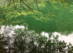 Spiegelei am alten Rhein. (Bild: Toni Sieber)