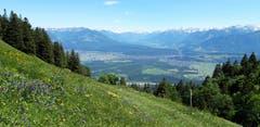 Von der Alpenflora unterhalb des Kamors schweift der Blick zu den Vorarlberger Bergen. (Bild: Klaus Businger)