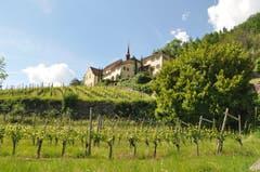 Das knallige Grün der Weinberg Reben, im Hintergrund das schöne Kapuzinerkloster Altdorf. (Bild: Elena Dittli, Altdorf, 2. Juni 2019)