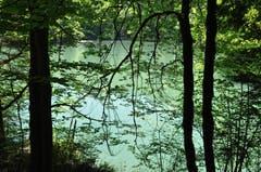 Auf dem Staufensee Rundweg.