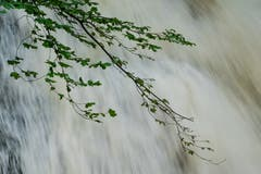Pflanzen, die am Ufer der Steinach leben, haben es derzeit besonders schwer. (Bild: Franz Häusler)