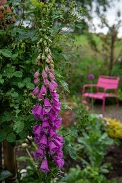 Während einer Regenpause im Garten in Lommis aufgenommen. (Bild: Thomas Segenreich)