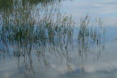 Oben oder unten? Wasserspiegelung im Naturschutzgebiet Rhyspitz. (Bild: Fredy Zünd)