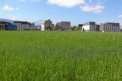 Der heilige Rasen darf auch beim Tribünenbau nicht betreten werden. (Bild: Andy Mettler / Swiss-Image)