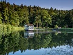 Die stille Spiegelung des Wenigerweihers. (Bild: Luciano Pau)