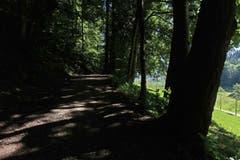 Wie gewünscht - Schatten an der Demutstrasse im Berneggwald. (Bild: Walter Schmidt)