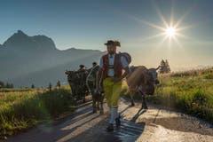 Alpaufzug auf die Alp Sellamatt und Selun. (Bild: Thomas Lutz)