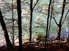 Der Schatten des Bergwalds am Seealpsee. (Bild: Edi Walt)