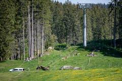 Beim tragischen Arbeitsunfall auf der Gerschnialp kam ein Mitarbeiter der Titlisbahnen ums Leben. (Bild: Keystone/Urs Flüeler, 5. Juni 2019)