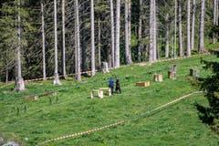 Die von der Polizei abgesperrte Unfallstelle nach einem Unglück bei den Revisionsarbeiten der Gondelbahn zwischen Engelberg und Trübsee. (Bild: Urs Flüeler/Keystone, Engelberg, 5. Juni 2019)