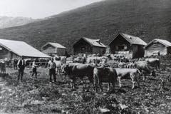Vieh und Sennen auf der Alp Siegel. (Bild: Landesarchiv AI)