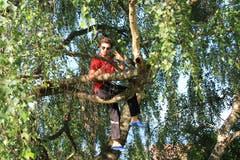 Wenn die Leiter auf die Bäume klettern, flüchten sie wohl von einer wilden Bande von Wölfen. (Lagerbild: Wolfsmeute Aurora der Pfadi St. Gallus Kriens, Steffisburg, 9. Juli 2019)