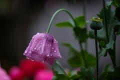 Am Tag als der Regen kam. (Bild: Franz Häusler)