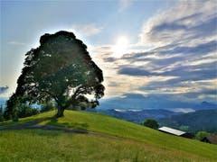Wunderschöne Morgenstimmung auf dem Holderchäppeli. (Bild: Urs Gutfleisch, Holderchäppeli/LU, 13. Juli 2019)