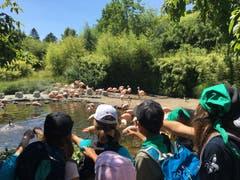 Die Wölfli Buochs im Zürich Zoo bei den Flamingos. (Lagerbild: 10. Juli 2019)