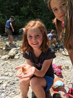 Die Natur zeigt sich in Sörenberg von ihrer schönsten Seite. Speziell den Schmetterlingen gefällt es toll bei den Ribi-Piraten. (Lagerbild: Schule Giswil, Ribilager, 10. Juli 2019)