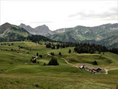 """Der Natur auf der Spur: Dieses herrliche """"Flecklein-Erde"""" findet man auf Glaubenbielen. (Bild: Margrith Imhof-Röthlin, 6. Juli 2019)"""