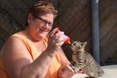 Den Katzennachwuchs muss Monika Riepl altersgerecht ernähren.(Bild Yann Lengacher)
