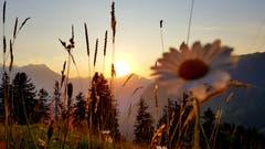 Ein wunderschöner Sonnenuntergang über den Eggenbergli. (Bild: Lydia Arnold, Bürglen, 19. Juli 2019)