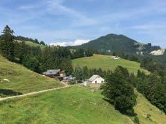 Sommerfrische auf dem Montlinger Schwamm. (Bild: Toni Sieber)