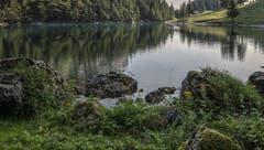 Am Ufer des Seealpsees. (Bild: Renato Maciariello)