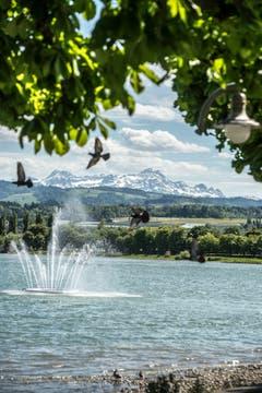 Der Säntis ist auch aus der Ferne ganz schön anzusehen – hier am Bodensee in Arbon aufgenommen. (Bild: Urs Bucher)