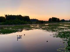 Sonnenaufgang bei den Bommer Weihern. (Bild: Reto Schubnell)